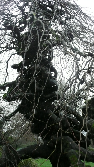 Tree muse revisited