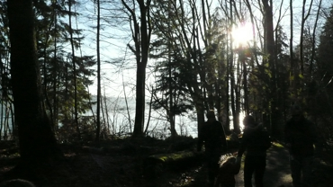 Trees, silhouetted