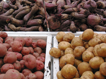 BC grown potatoes