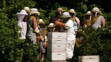 Los Farm bees