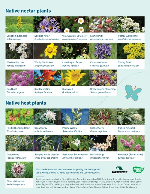 Butterfly-friendly plant guide