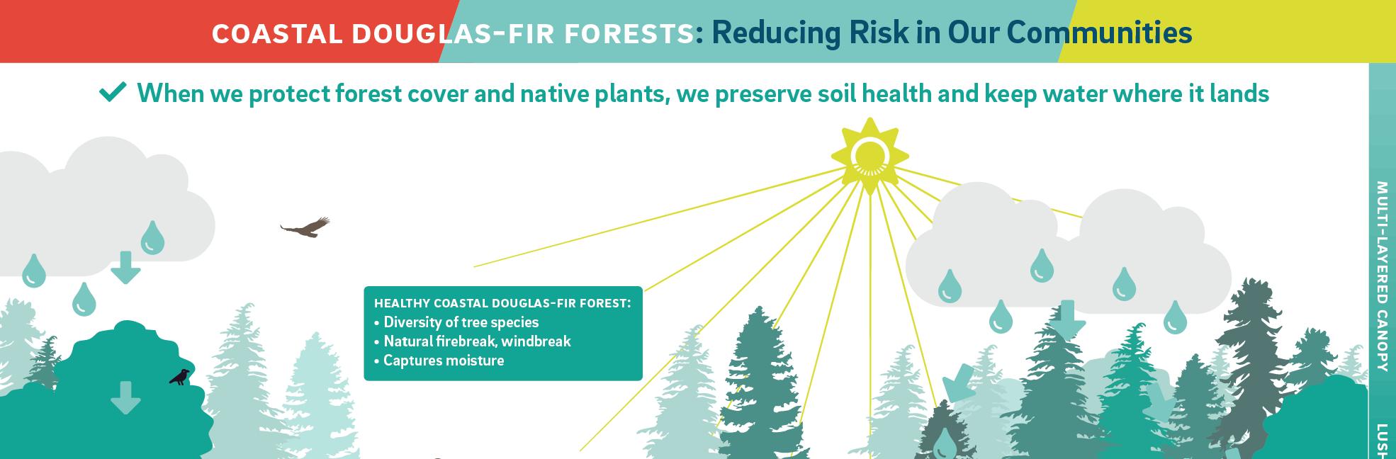 Forest management infographic