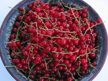Red currants (top view)