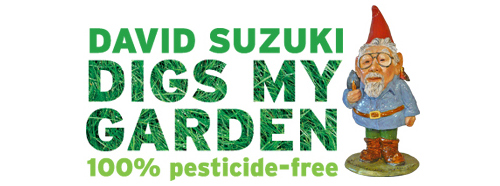 David Suzuki Digs My Garden