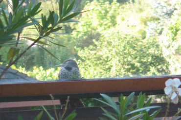 Flicker on the window