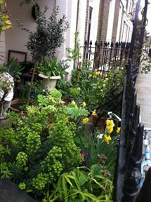 London flat garden