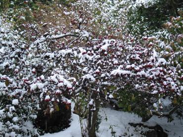 merryberries2.jpg