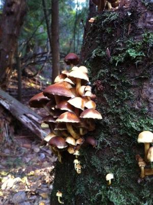 Mushrooms (3)