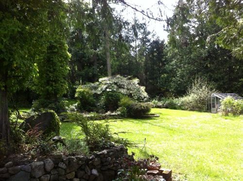 Omi's garden