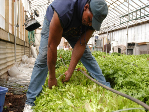 Will Allen harvesting
