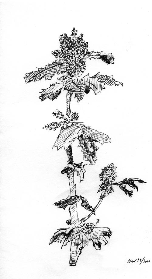 Yellow Holly (b&w)